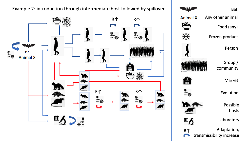 graph and key of animals and humans